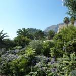 Gardens On Capri